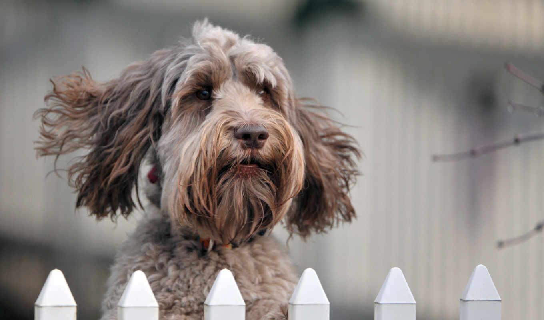 забор, собака, взгляд,