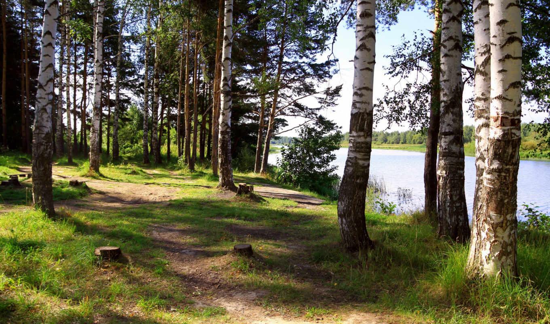 березы, россия, ярославль, река, солоница, природа, деревя, лес, картинка, россии,