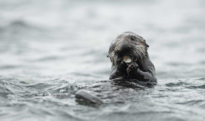 otter, animal, download, sea, bridge, koln, iphone, view, full,