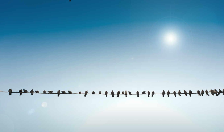 птицы, провод, небо, картинка,