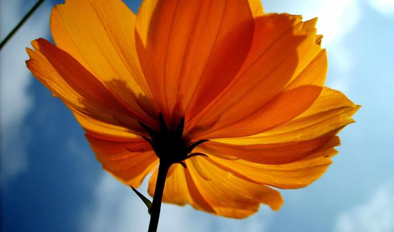 ubuntu, цветы, everything, коллекция,