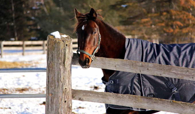 лошадь, снег, winter, загон, zhivotnye, морда,