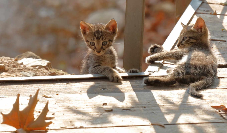 кот, котенок, animal, gato, id, шляпа, short, red, gratis