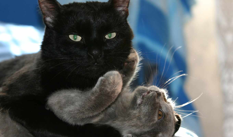 кот, млекопитающее, позвоночное животное, felidan, small, medium, фон
