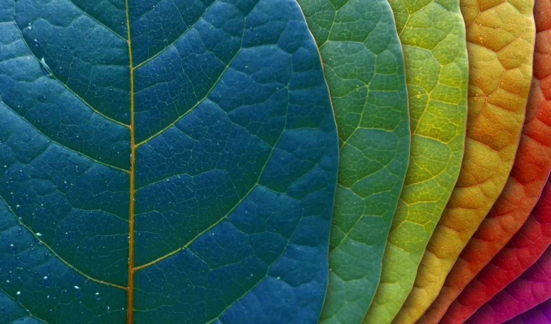 фон, листья, градация, листок, цвета,