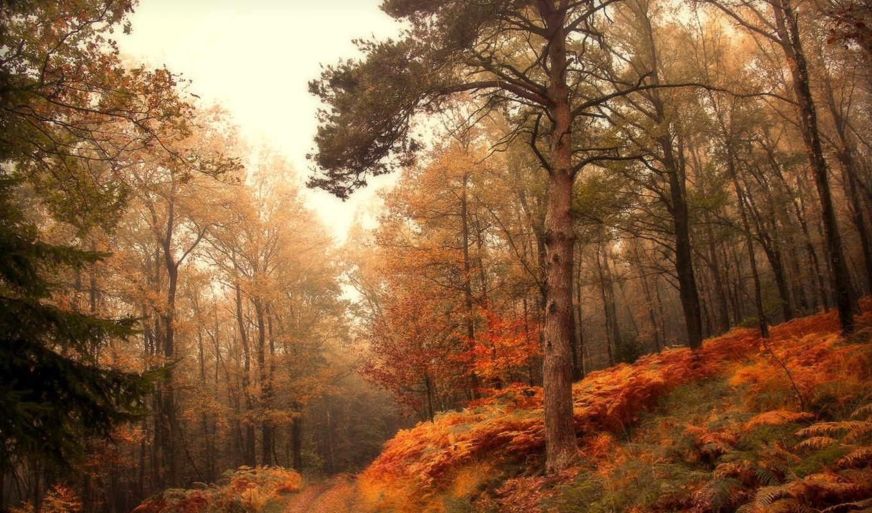 лес, осень, природа,