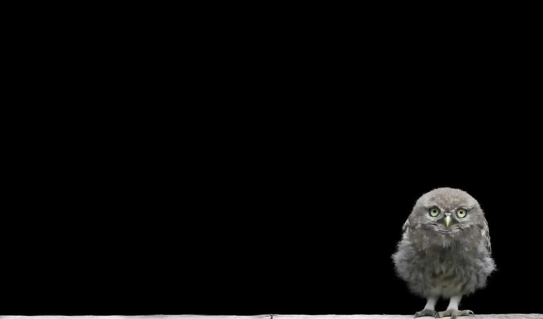 minimalizm, птенец, совёнок, июня,