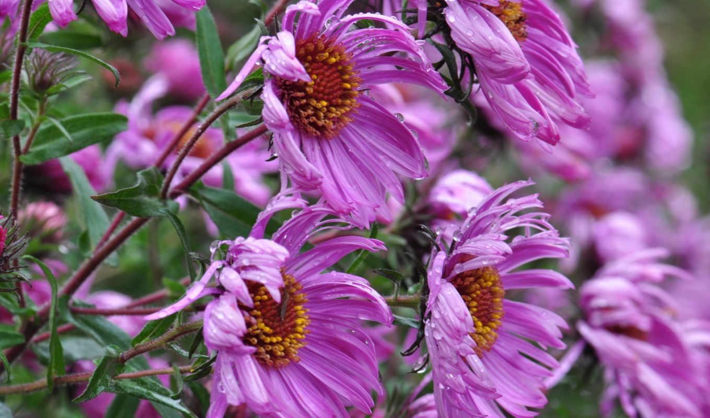 трава, цветы, природа, растения, herbs, plants, flowers,