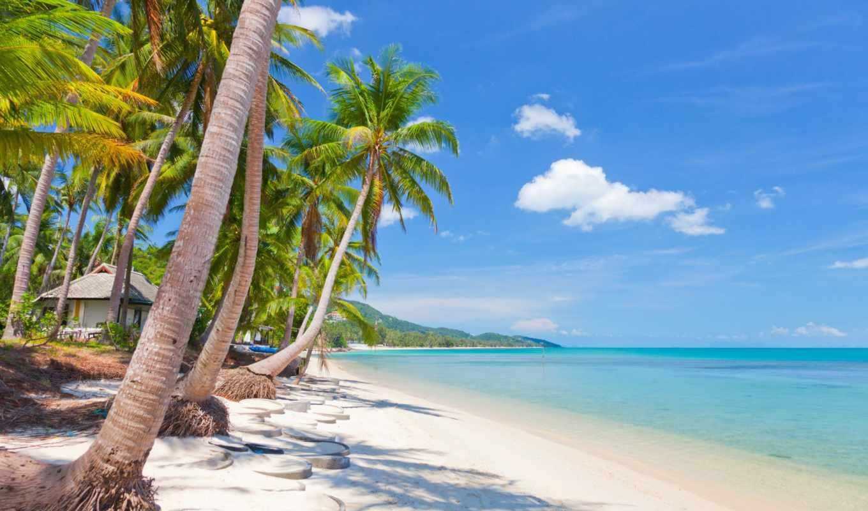 море, пальмы, скинали, пляж, landscape, tropical, фотопечать, остров,