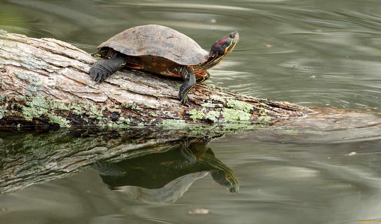 free, черепаха, best, screensaver, рисунки, log, shell, марио, viagra,