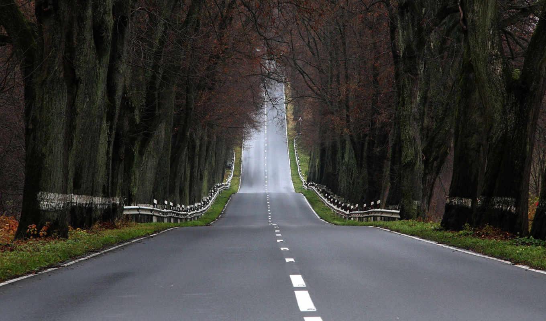 дорога, пейзажи, деревья, леса, дороги, جاده, фотографии, ввысь, уходит,