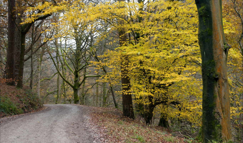 осень, дорога, природа, картинка, картинку,