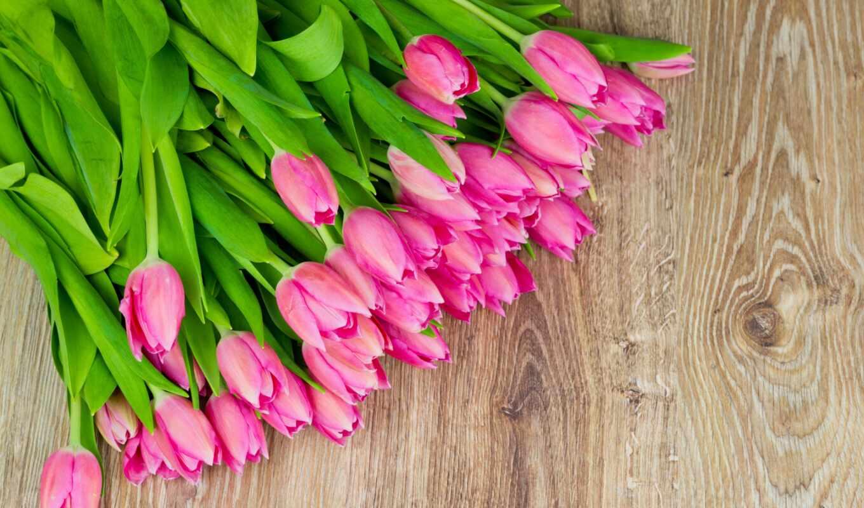 тюльпаны, розовые, цветы, много,