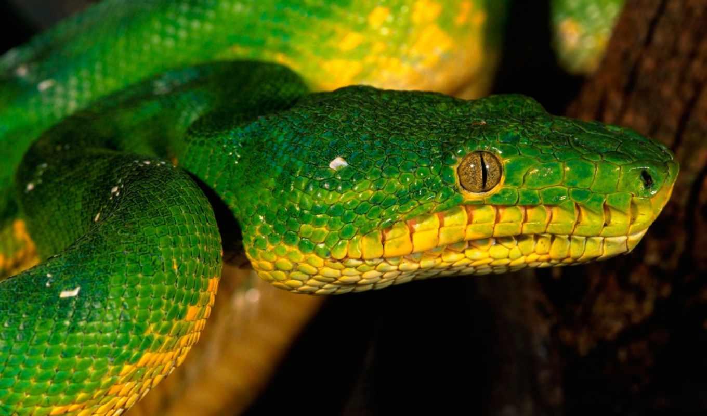 snakes, snake, кб, зелёный, зелёная,