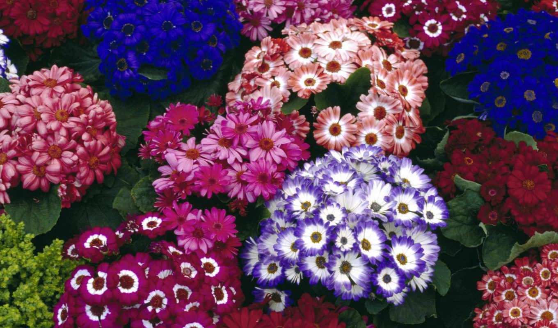 цветы, flowers, free, widescreen, high, весна,