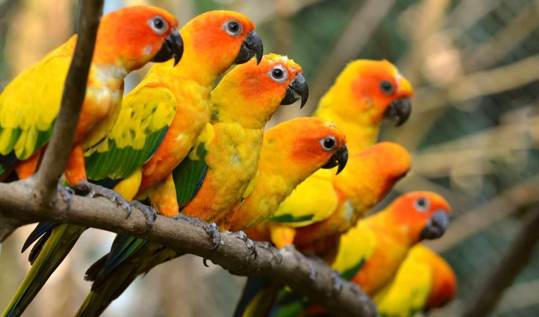 попугай, parrots, birds, desktop, ствол,