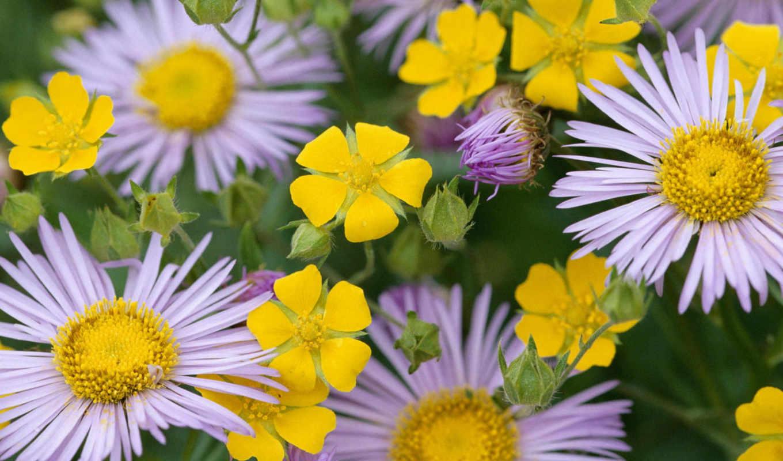 цветы, flowers, para, bajar, tags, красивые, turbobit, flores,