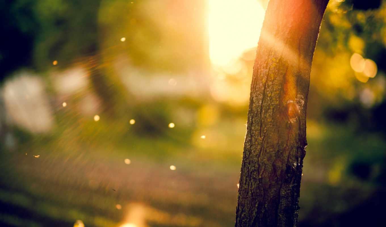 ствол, дерева, планом, крупным, природа,
