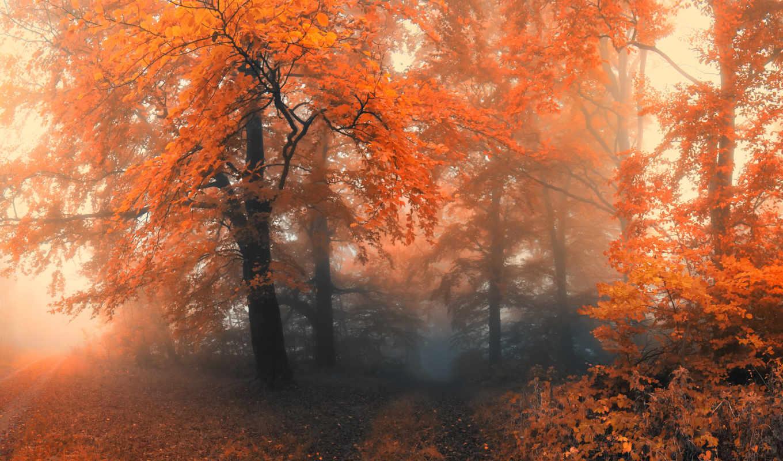 туман, деревья, осень, лес,