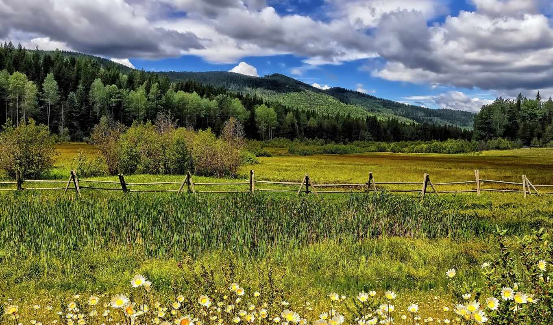 cvety, ромашки, lug, забор, деревя, oblaka, горы,