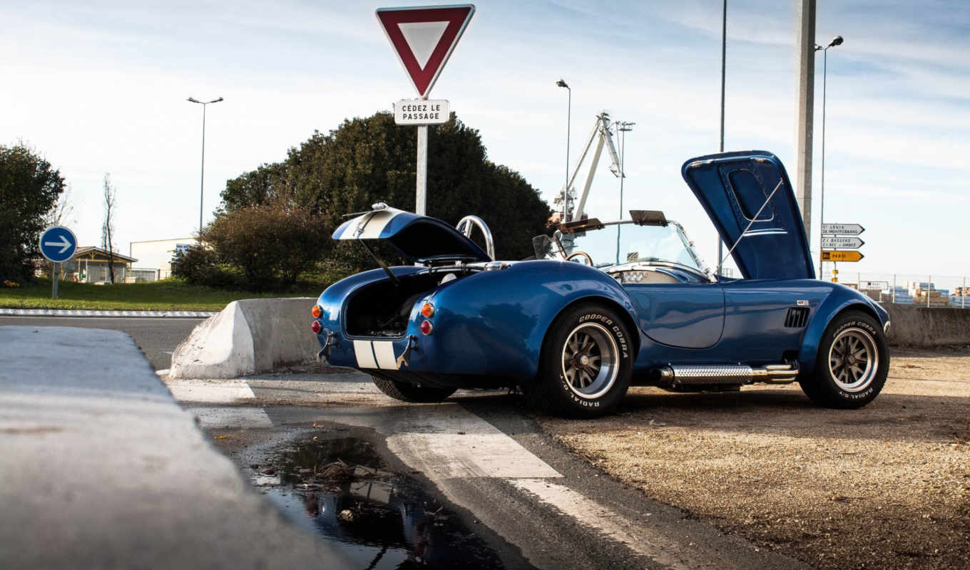 animals, photos, shelby, son, browse, cobra, cars, favorite, flickr, picssr,