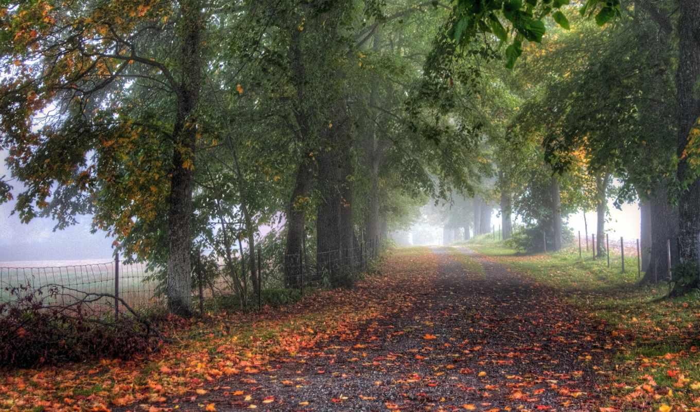 туман, деревья, аллея, ограда, дорога,