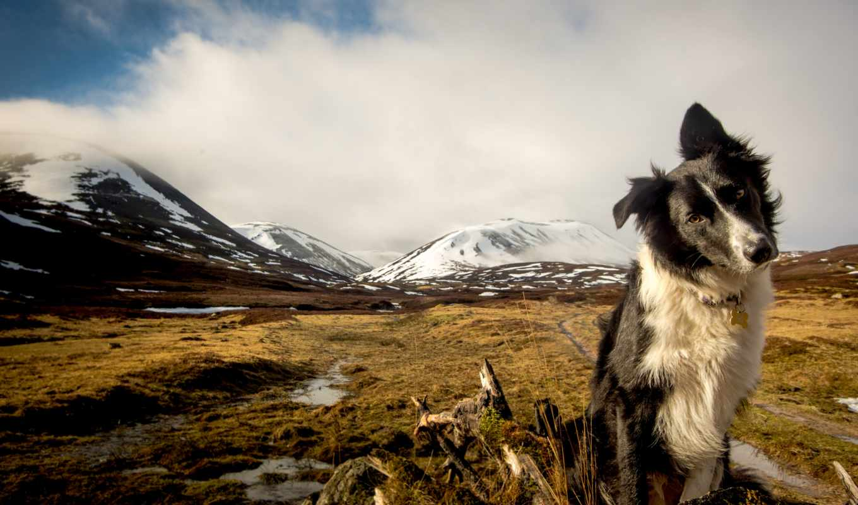 собаки, zhivotnye, колли, border, горы,