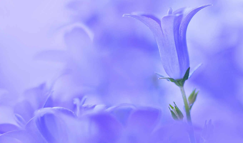 цветы, картинку, картинка, макро, save, колокольчики, выберите, кнопкой, правой, мыши, скачивания, postimage, колокольчик,