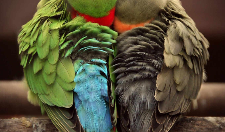love, найти, связаться, зарегистрируйтесь, войдите, чтобы, других, ваших, попугай,