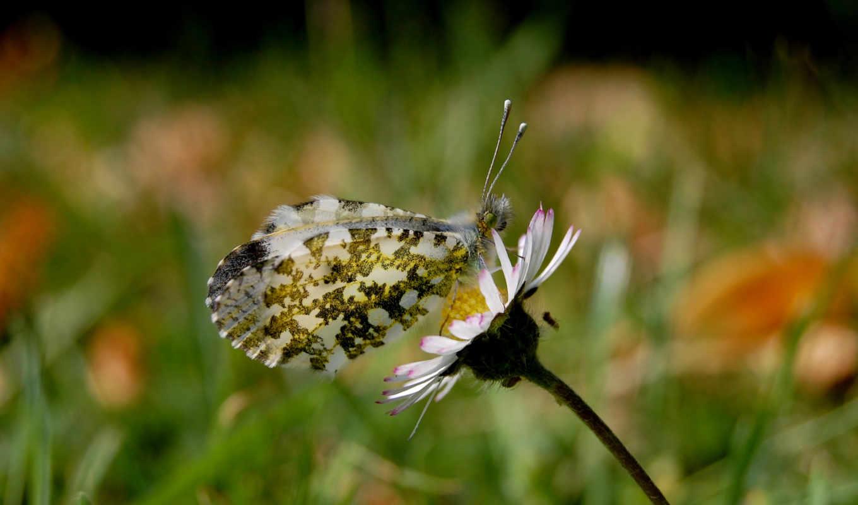 бабочка, вектор, цветы, flowers, free, фон, цвета, pack, зелёный,