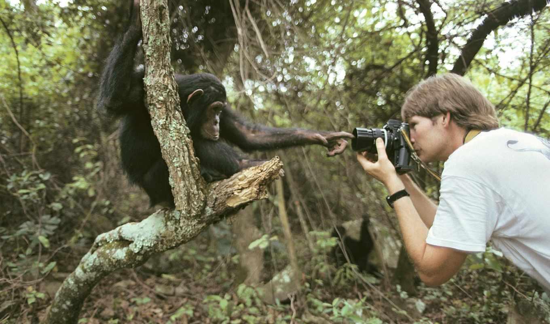 фотоаппарат, raw, adobe, фотографий,