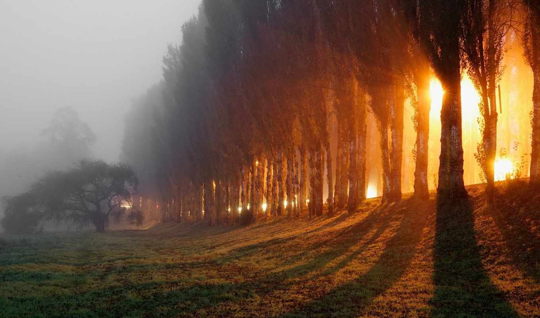 утро, туман, осень, rays, лес, картинка, природа,