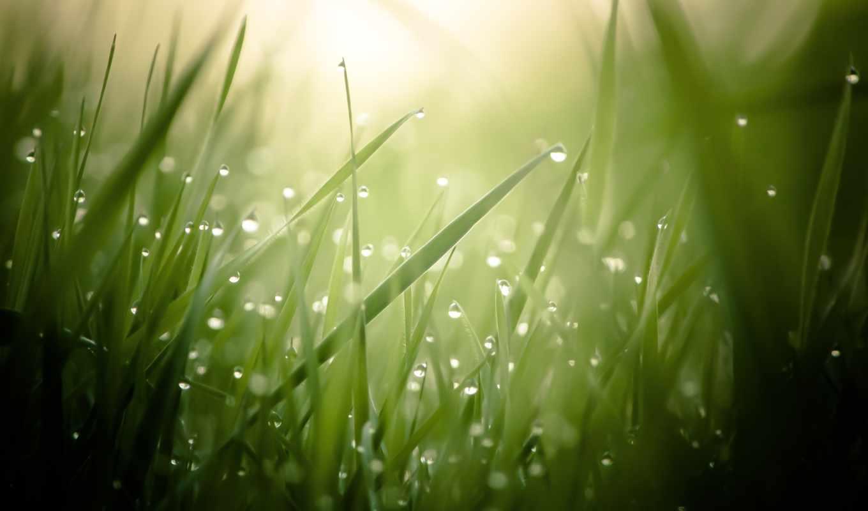 роса, трава, капли, макро, browse,