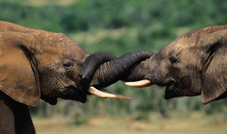 открытки, ствол, фотоприколы, прикольные, прикол, слон,