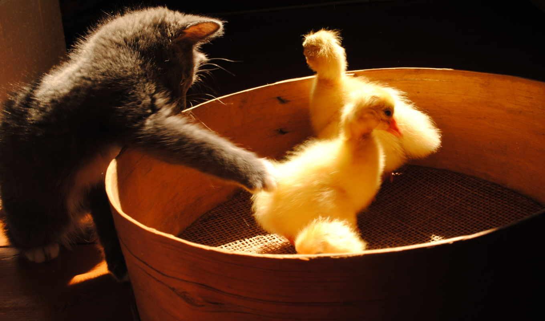 животные, кошки, категории, можно, эти, быстро,