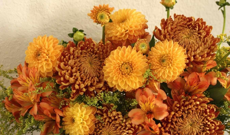 flowers, подборка, красивые,