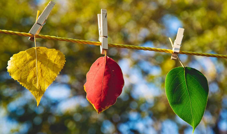 листья, осень, природа, планом, красный, крупным, веревка, зелёный, желтый, free,