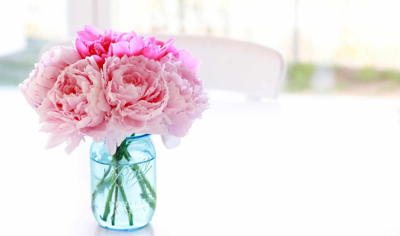 пионы, цветы, банка, розовый,