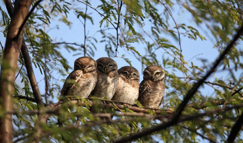 сова, дерево, птица,