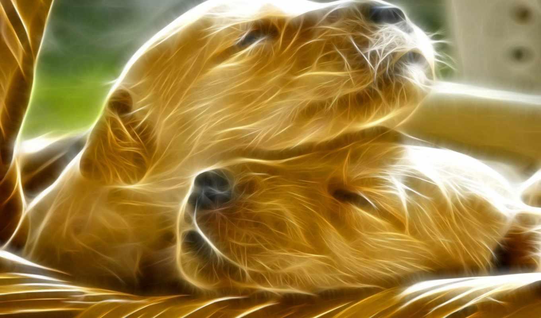 dogs, собака, free, fractal, art, живопись, pinterest, cats,