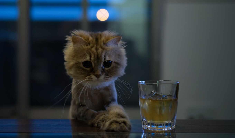 тюлень, кот, бутылка, water, грустный, котенок, funny, создать, который