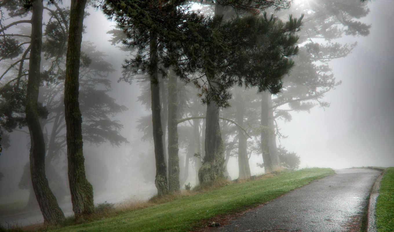 туман, природа, алейка, парк, утро, мокрая, картинка,