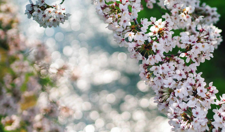 весна, макро, ветки, цветы, блики,