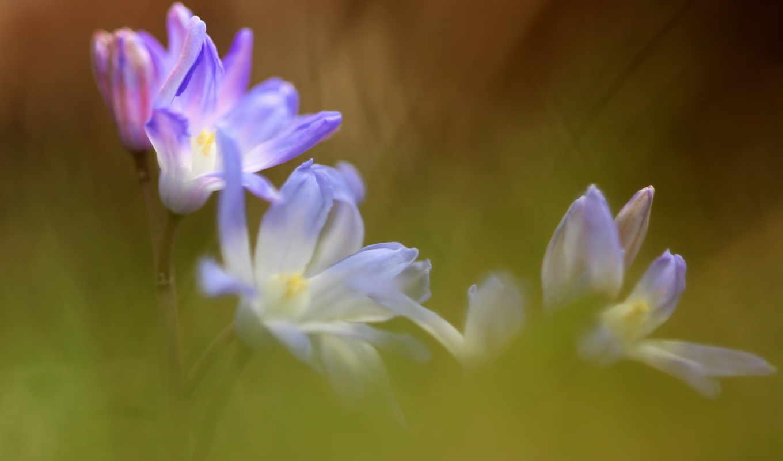 цветы, summer, качестве, высоком, природа,