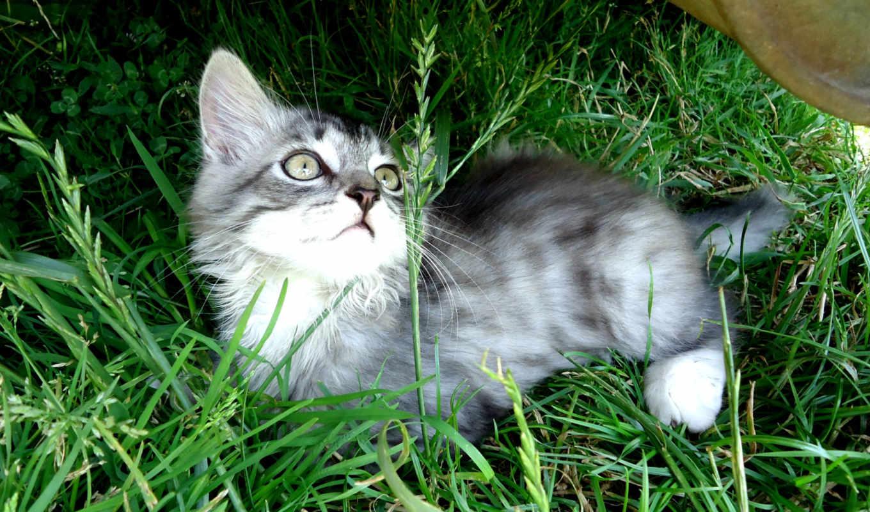 desktop, cute, котенок,