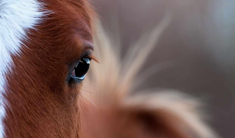 лошадь, глаз, свет, взгляд, лошади,