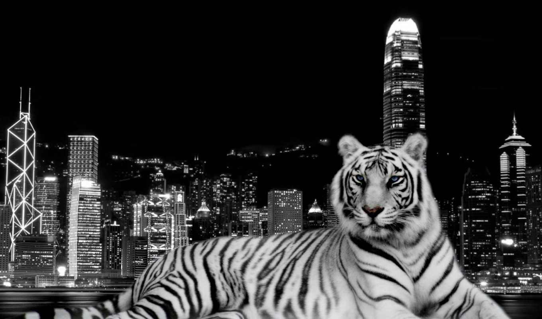 zhivotnye, тигр, гавань, разруха, чёрно, янв, kong, hong,