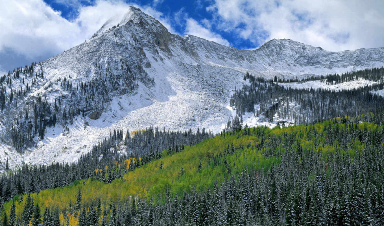 gunnison, national, лес, early, снег, пасть,