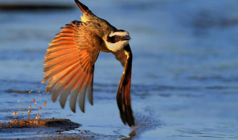 код, america, птица, hawk, центральный, пляж, drift, flying, que, орлан,