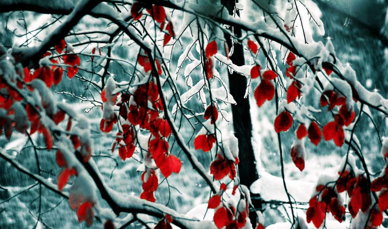 winter, снег, природа, trees, листва, картинка, ветки, нояб,
